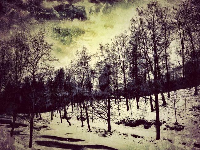 Landscape Trees Darkart