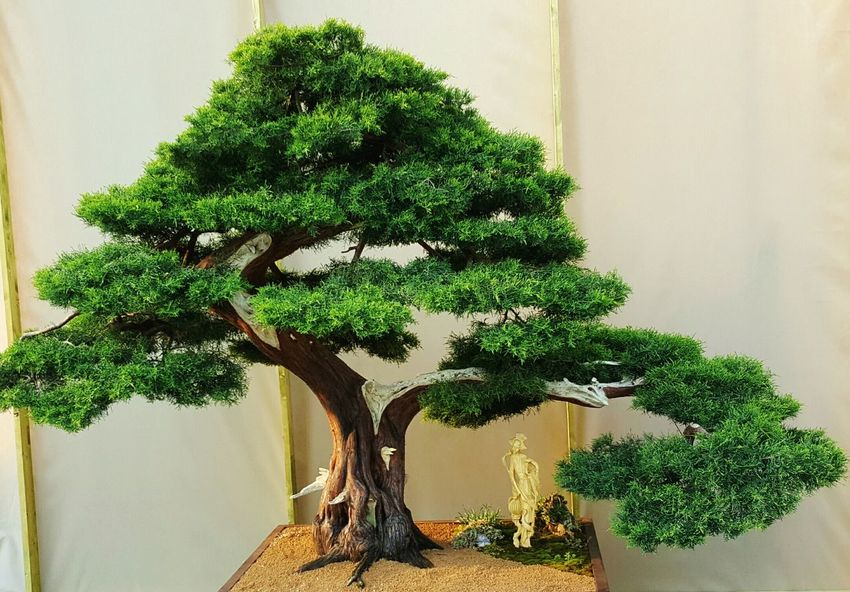 Bonsai Tree Miniature Bonzai Bonzaitree
