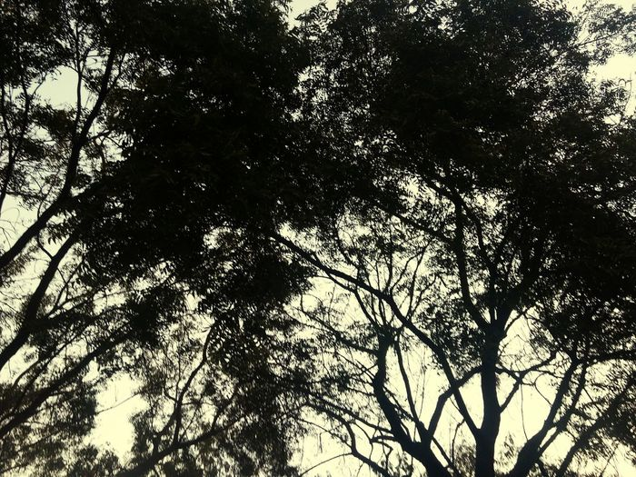 Low Angle View Nature Tree Beauty In Nature Outdoors Evening Sky Hobby Black Leafs 🍃 Longtrees Skylight By Design Full Frame Randomclick Mobileshot Motog4plus,❤ If Trees Could Speak