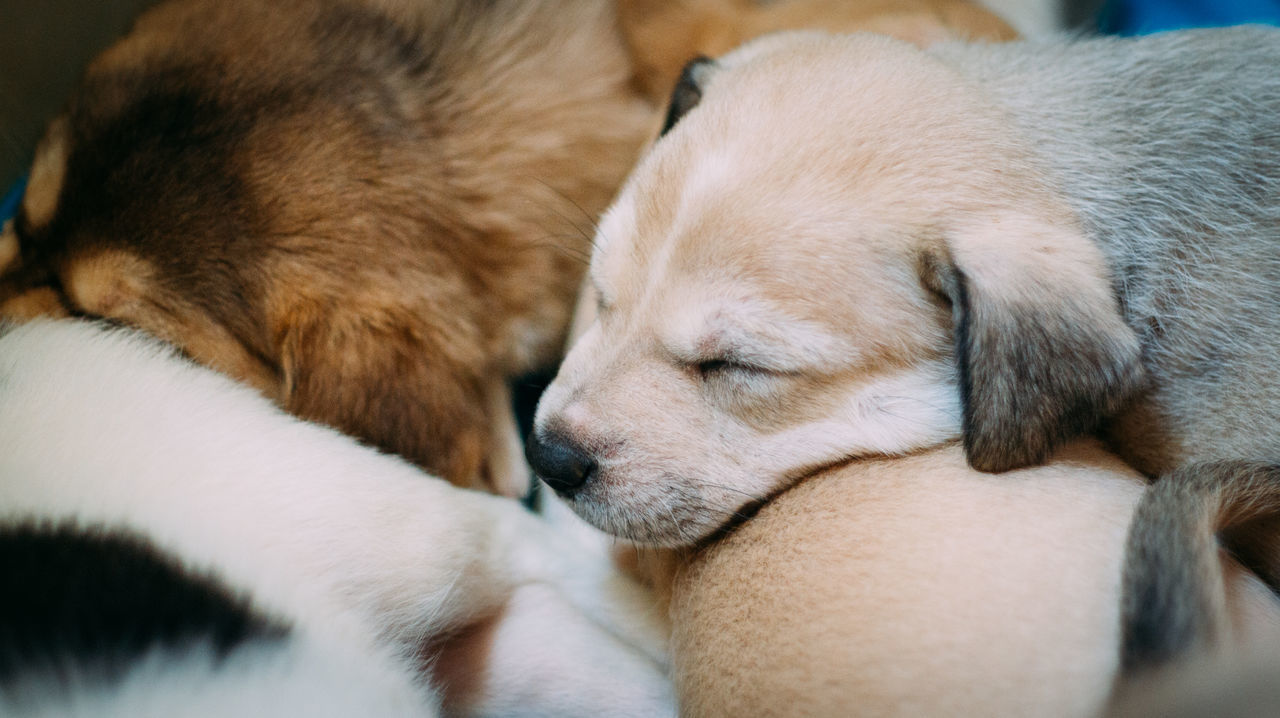 Close-Up Of Puppies Sleeping Indoors
