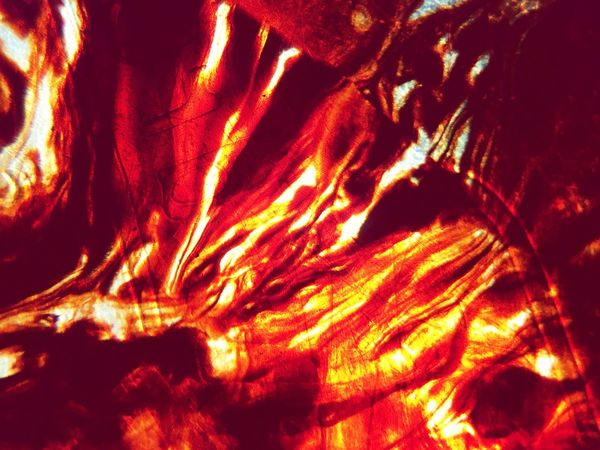 Plectrum 53 Full Frame No People Backgrounds Red Nature Orange Color Close-up