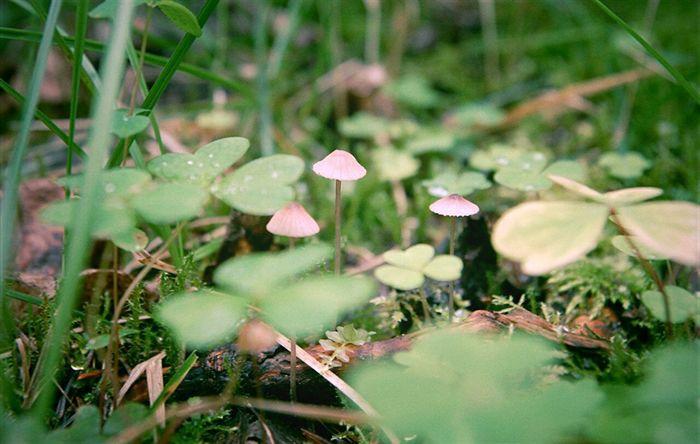 грибы осень осень Лес Mushrooms Forest Rain Geeen Grass In The Forest