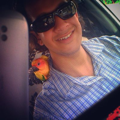 Drivingaround with a Pet Sunconure Parrot SunParakeets cute driving RearViewMirror selfie selfiewithpets petlove instapets instabirds