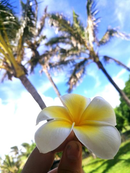 Tipanie Tipanie Flor Vacations Outdoors Nature Easter Island EyeEm Nature Lover Beauty In Nature