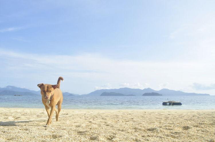I am Makam & My sea EyeEm Selects Mammal Animal Themes Animal One Animal Domestic Animals Domestic Beach Sea Water Sky Nature Dog Day Cloud - Sky Blue Canine Pets Land Purebred Dog Sand