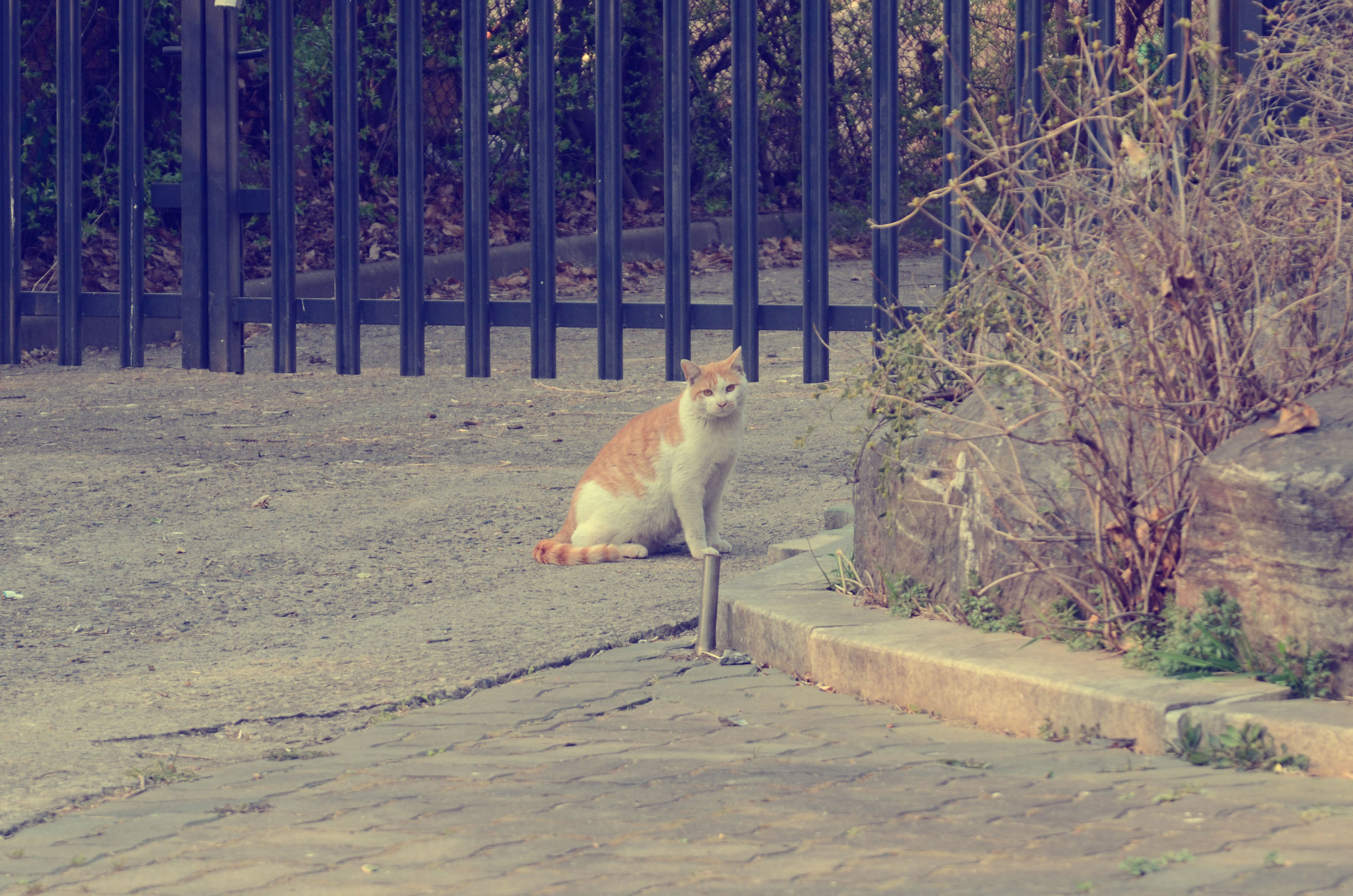 animal themes, mammal, one animal, domestic animals, pets, no people, nature, day, cage, animals in the wild, outdoors, feline