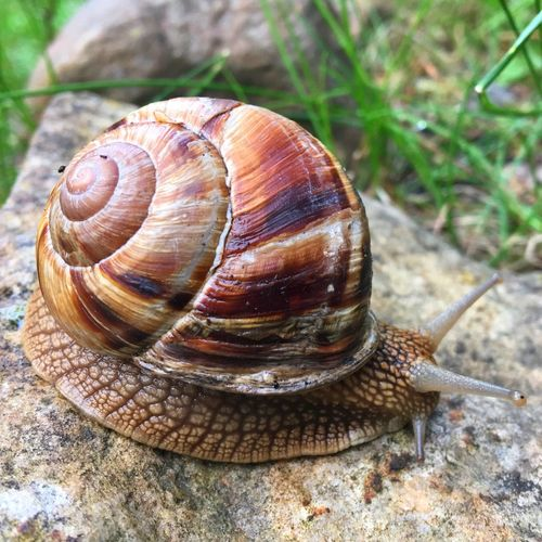 Snail IPhone Photography