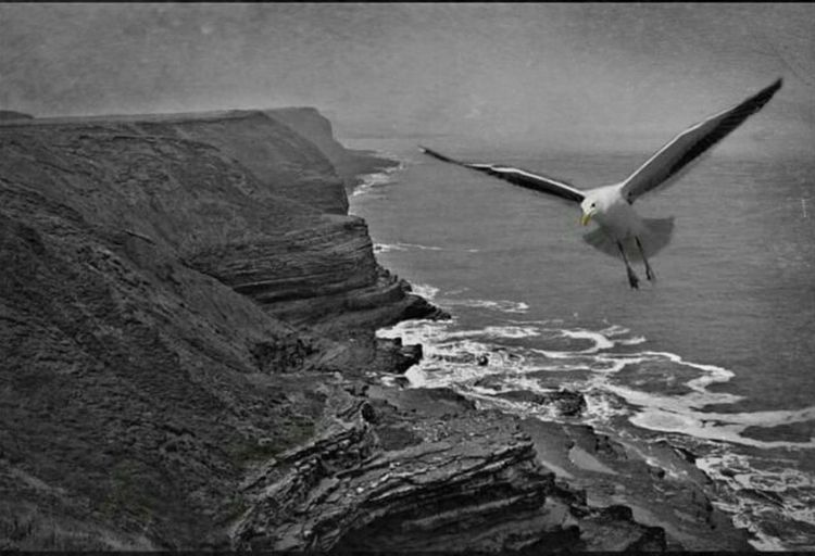 Filey Cliffs Cliffside Filey Bay Filey Seafront Fileybrig Northyorkshire Sea And Sky Seagull Seagulls In Flight Seagull And Sky Blackandwhite Blackandwhite Photography Ocean View Ocean Waves Waves Water Waterfront