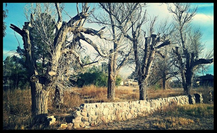 What Remains  Empty Spaces Deserted Stone Wall Desert Life Dead Trees