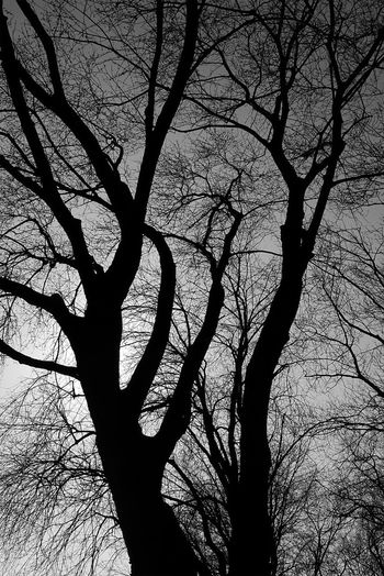 I'm not a photographer - but I can see... Subtlelight Love Me Some Trees EyeEm Nature Lover EyeEm Best Shots