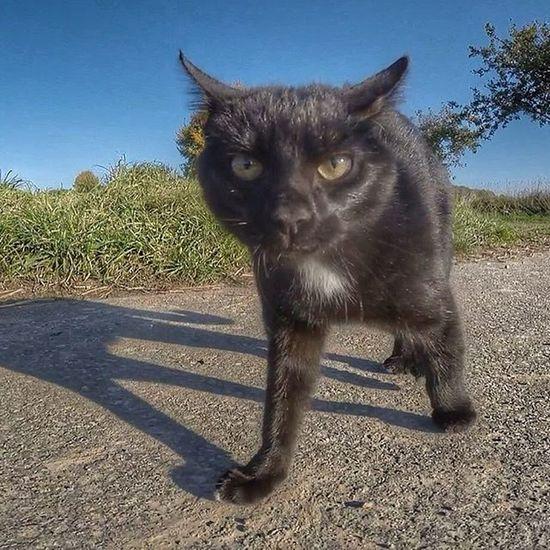 Katze Gassi Welpen