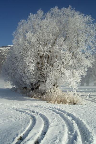 The Magic Mission Schweiz Switzerland Wallis Leuk Winter Bäume Trees Wintertime Winter Wonderland Winter Trees Schnee Snow Eis Ice Spuren Im Schnee Tracks In Snow Kalt Cold Cold Temperature