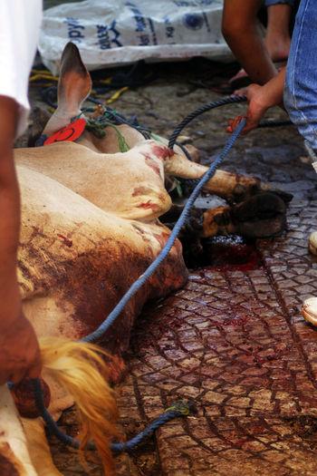 Animal Killing Blackandwhite Qurban Sacrifice Slaughter