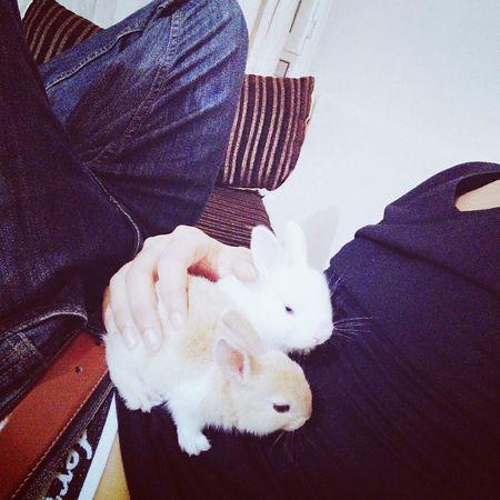 Honey Sweet Bunnies White And Brown ı Love It ❤ Izmirlife Aydin/Turkey Enjoying Life Hello World Relaxing