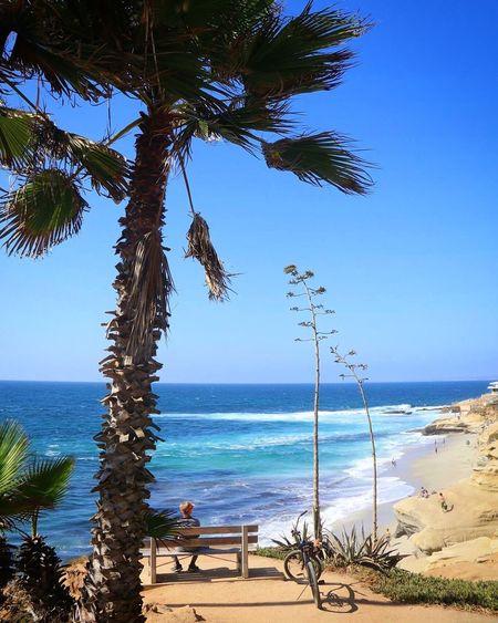 Palm tree on beach against clear blue sky