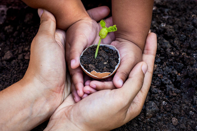 Child with parents hand holding young tree in egg shell together for prepare plant on ground-6 Mother Nature Plant Tree Woman Power Botany Child Egg Environment Family With One Child Garden Girl Give Holding Human Hand Kid Leaf Seeding Seedling Shell Small Soil Sprout🌱 Young Adult