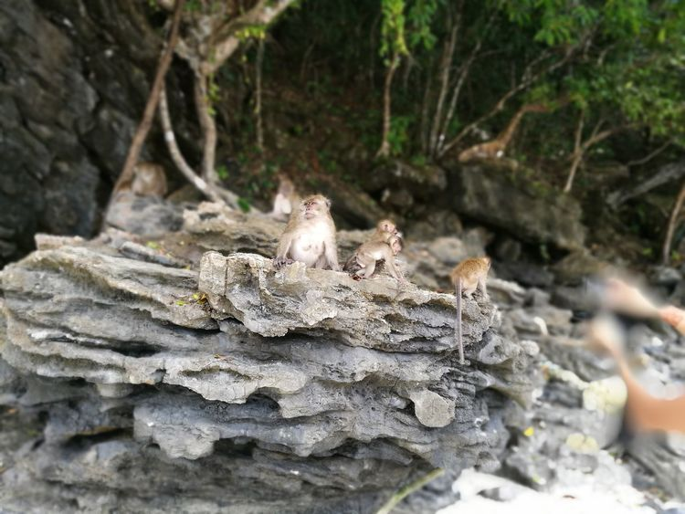 Nature Animal Themes Monkey Beach First Eyeem Photo