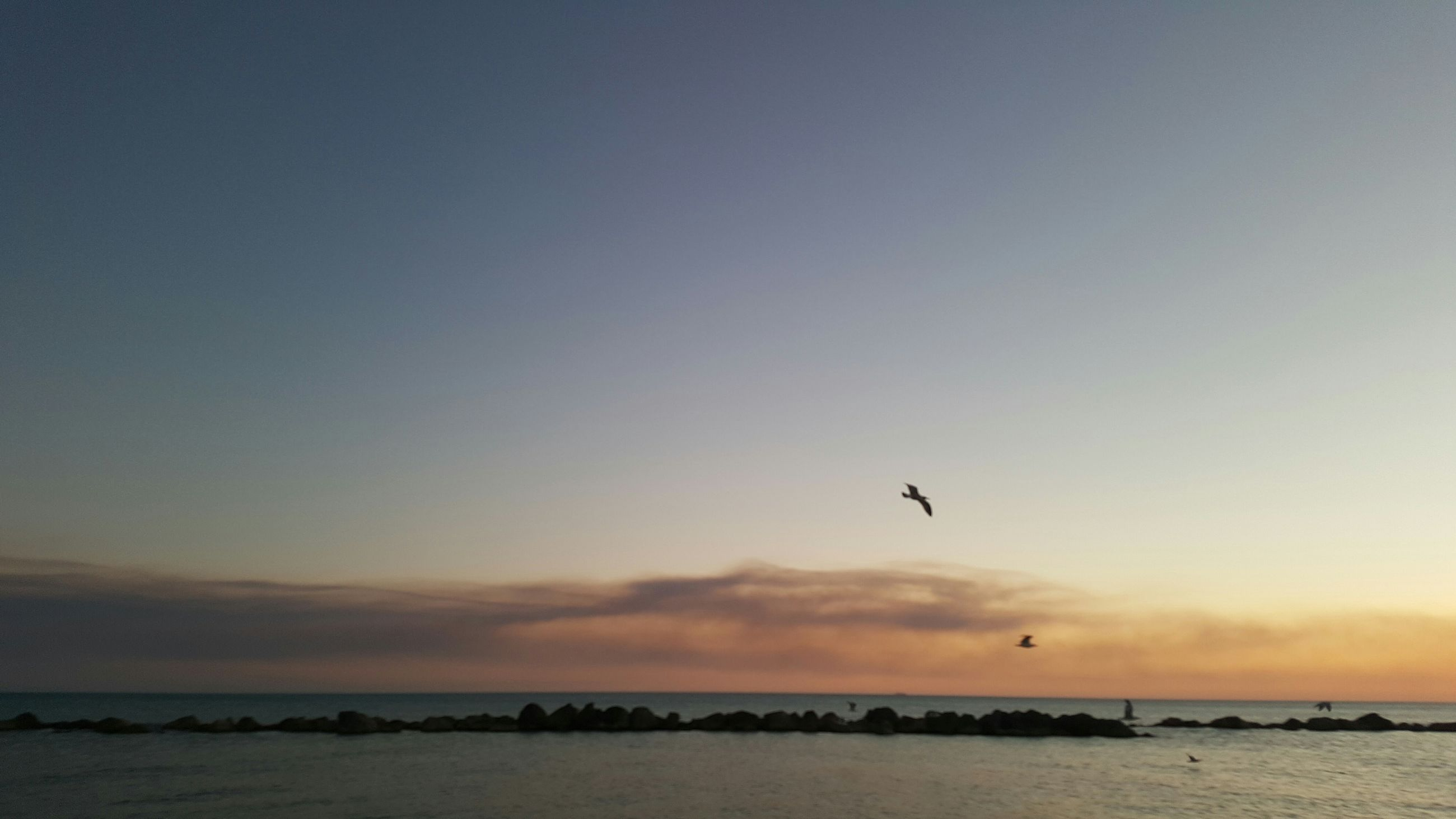 flying, sea, bird, sunset, water, animal themes, sky, nature, outdoors, animals in the wild, beauty in nature, no people, one animal, horizon over water, scenics, beach, togetherness, day, drone