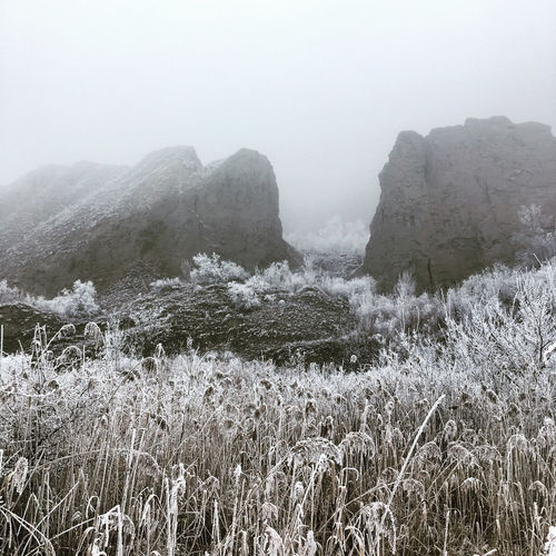 Fog Cold