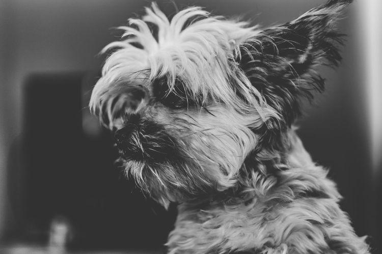 Close-up of dog at home