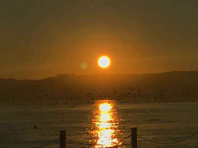 Bird Sunset Sun Beauty In Nature Scenics Nature Orange Color Tranquil Scene Tranquility Sunlight Sea Sky Water Outdoors Silhouette No People Horizon Over Water