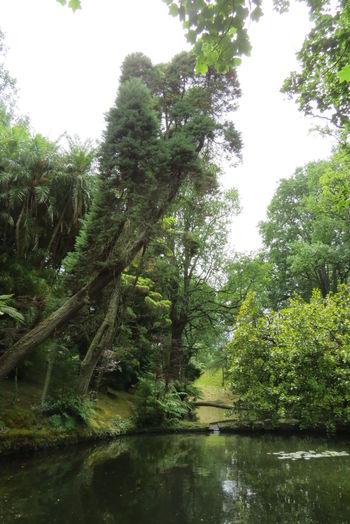 Açores - São Miguel Garden Green Green Color No People Park Terra Nostra Park Tranquil Scene Vacation Time