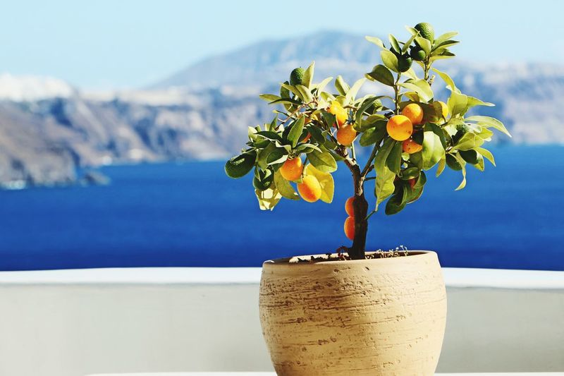 Close-up of potted plant against sea