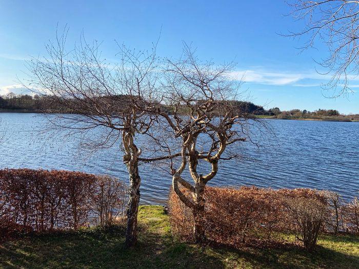 Bare tree on lakeshore against sky