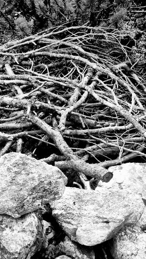 Shades Of Grey rocks and sticks