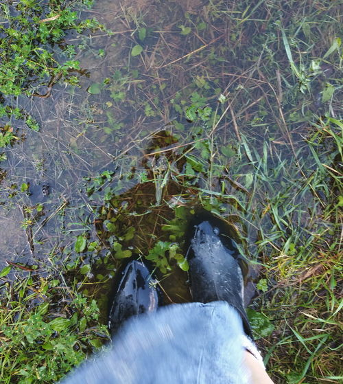 ... the fine art of putting one's Foot down: stand your Ground and do what really matters ... Looking Down Feet Galoshes Puddle After The Rain Grass Shoe Field Personal Perspective Green Color Outdoors Nature Green Grassy Person лужа сапоги после дождя