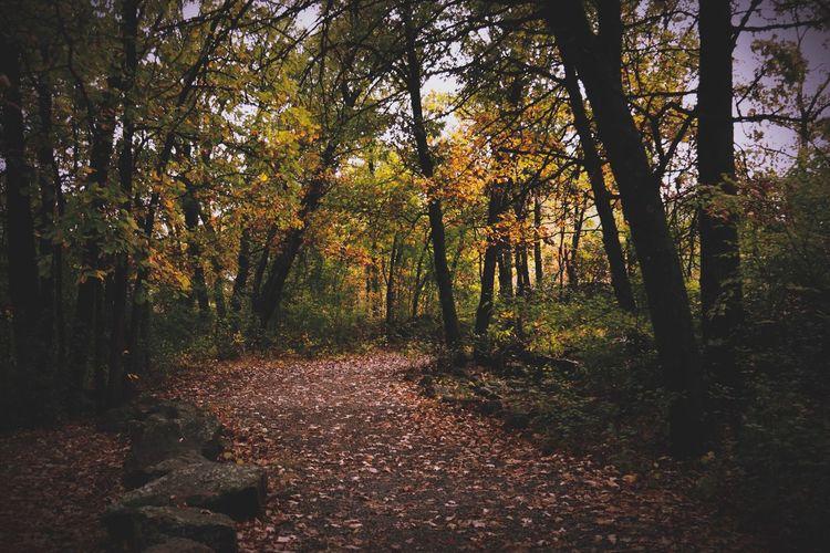 Reupload tTreenNaturefForesttTranquilitycChangesScenicsbBeauty In NaturetTranquil ScenelLeafoOutdoorsiIdylliclLandscapewWoodLanddDaytTree TrunknNo PeoplegGrowthtThe Way ForwardtTravel Destinations Autumn