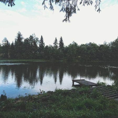 Tree Water Lake Reflection Living Organism Sky Reflection Lake