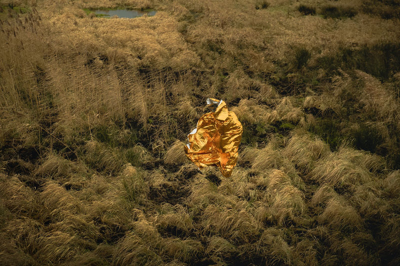 Field Gold Gold Foil In The Air Shape Above The Ground Bird Of Prey Day Field Flying Gold Colored Golden Sculpture Grass Growth High Angle View Landscape Nature No People Object Outdoors Plant Sculture