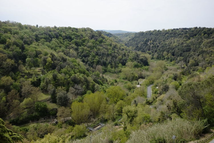 Tuscany Countryside Tree Plant Beauty In Nature Environment Scenics - Nature Tranquil Scene Tranquility Growth Sky Landscape No People Day Nature Green Color Mountain Land Non-urban Scene High Angle View Forest Outdoors Rolling Landscape