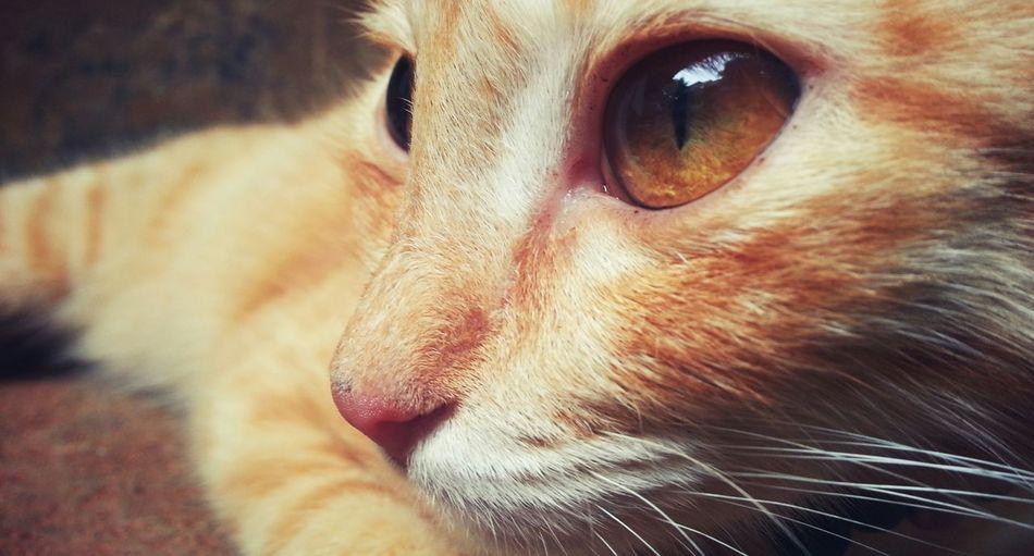 Cat eyes! Cat Cateyes Cat Looking Away Cat Looking Away From Camera Serious Cat