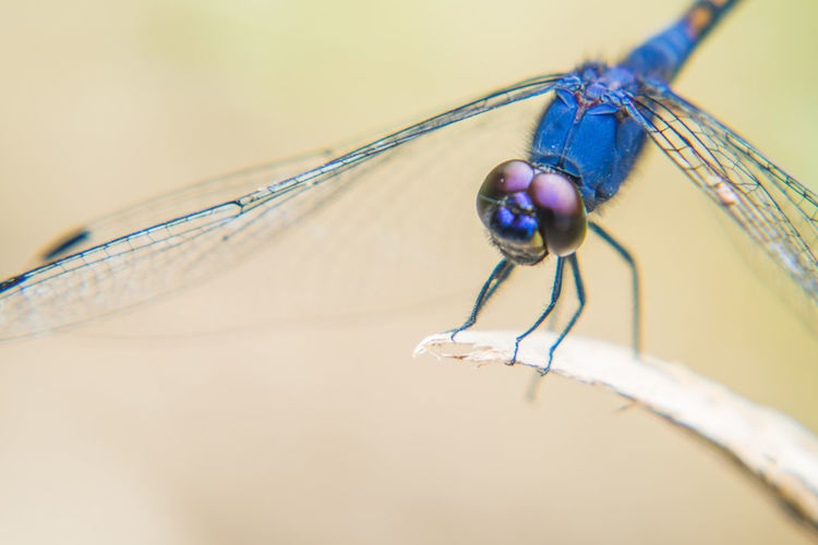 Extreme close-up of damselfly on plant