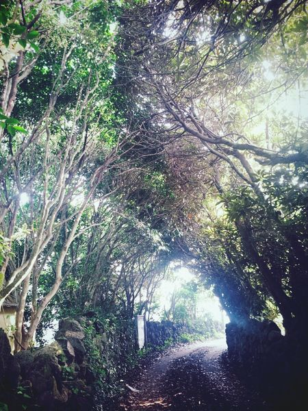 비밀장소 Trees