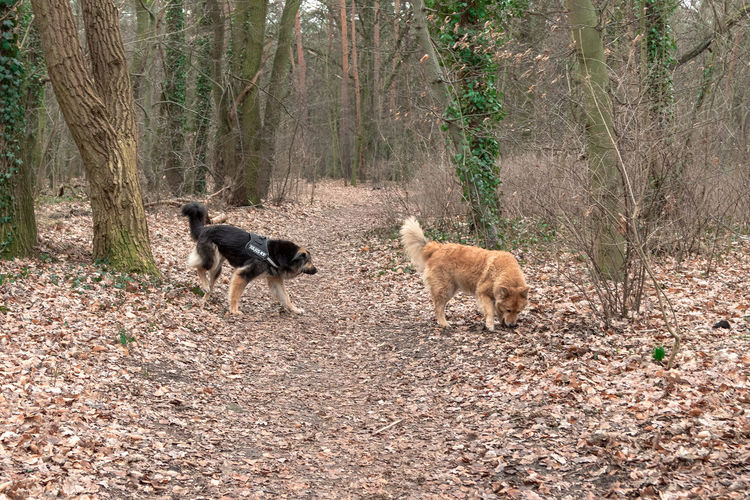 View of dogs on field in forest