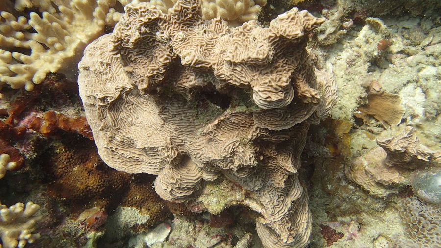 Close-up of coral on tree trunk