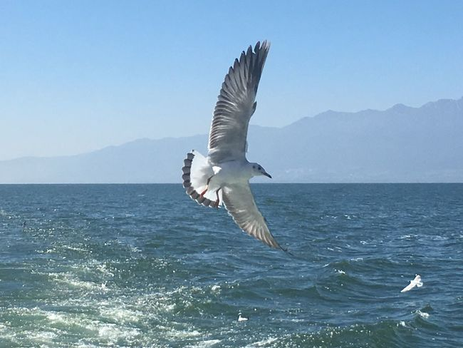 Bird Sea Spread Wings