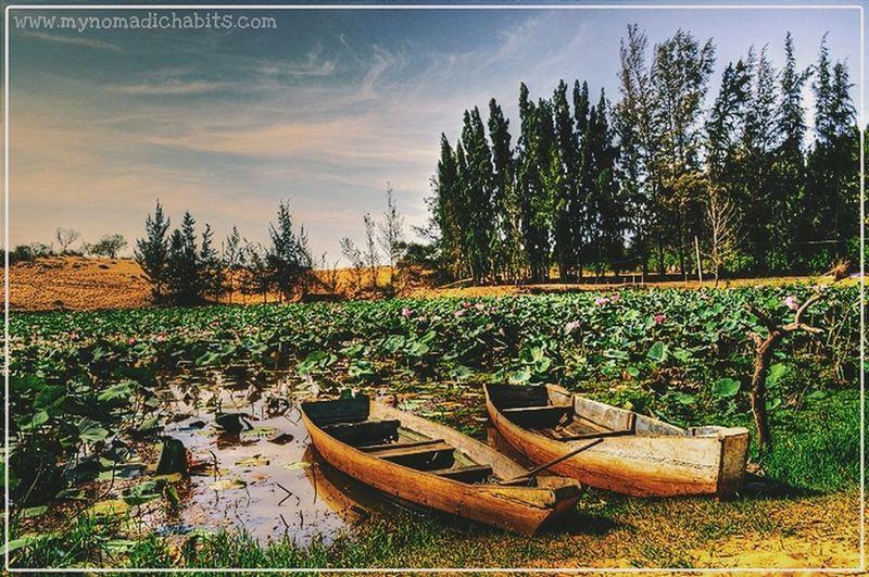 Lotus lake in