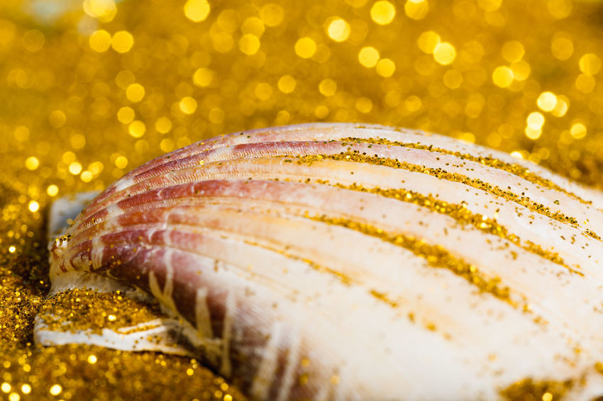 Glitter Gold Holiday Beach Close Up Close-up Decoration Detail Freshness Luxury Macro Mussel Nature No People Sand Shell Shiny Symbol Vacation Wealth