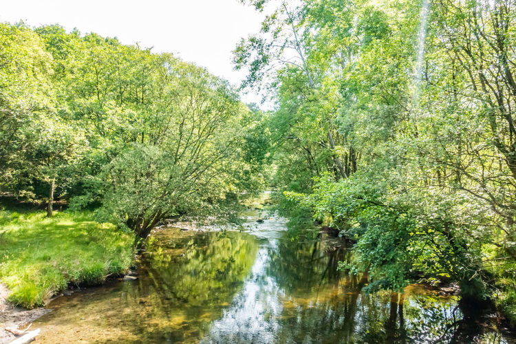 Scenic view of river amidst trees in forest against sky