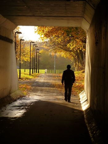 Into the Autumn colours Autumn colors Scotland Autumn Real People Architecture Walking Rear View Men Direction A New Beginning Sunlight The Way Forward Full Length Lifestyles Nature Silhouette Outdoors Day Tree Autumn Mood