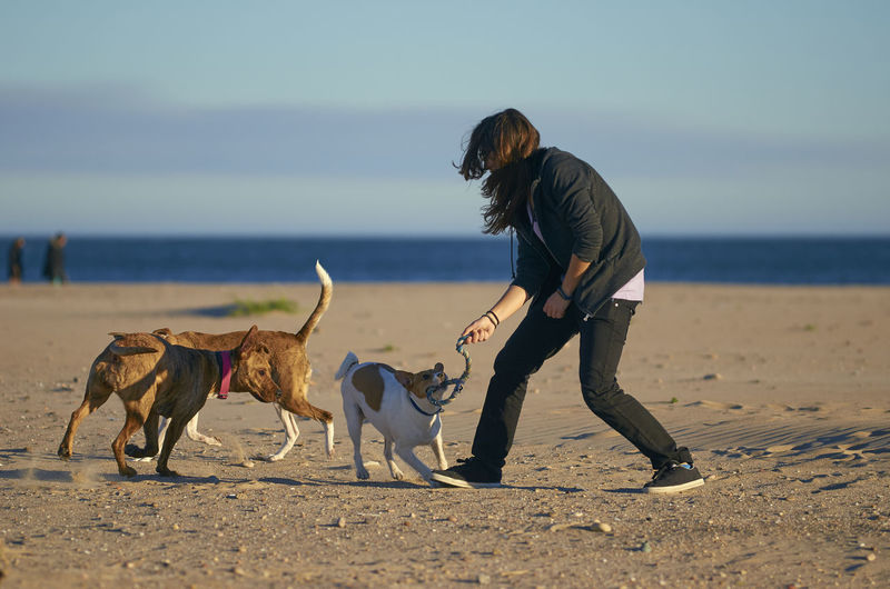 Woman Playing With Dogs At Beach Against Blue Sky