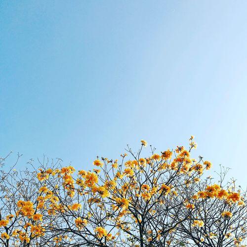 HongKong Namcheongpark Namcheong Park Flower
