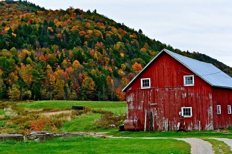 House on grassy field near tree mountain