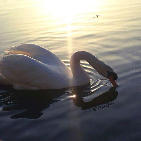おつかれさま♪ トリチャレンジ⭐ #ic_water #ic_water_birds #insta_crew