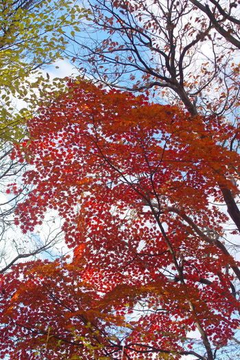 雪割橋展望台 紅葉 秋の風景