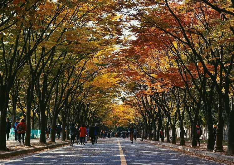 Autumn Tree Change Leaf The Way Forward Nature Walking Tree Trunk Outdoors Growth Road Scenics Tranquility Beauty In Nature People Day Branch Adult Adults Only